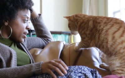 Conversaciones que tienes con tu gato (Conversations You Have With Your Cat)